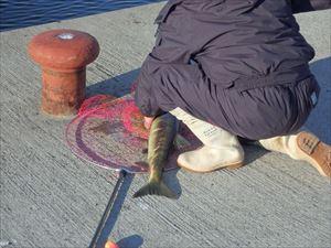 鮭を釣り上げた人