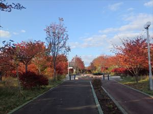 赤がきれいな遊歩道の紅葉
