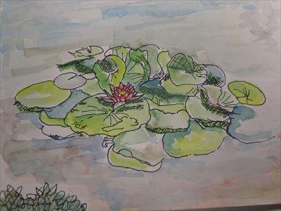 中庭の睡蓮