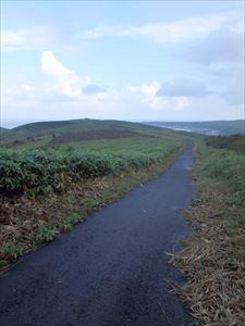 歩きやすい舗装道を進む