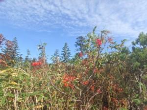 赤い実と秋の空 きれいだ