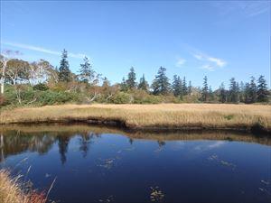 吸い込まれそうな 深い色の池塘