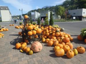 ニセコの秋の名物 かぼちゃの野外展示