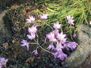 名前の知らない きれいな花
