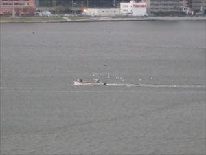 海鳥を連れた漁船 おもしろい