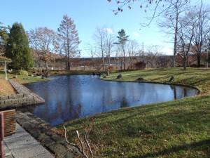 きれいな庭の池 迂闊にも知らずにいた 残念!