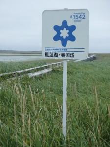 湿地がどこまでも広がる