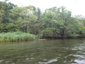 浅い川底が見える 流れは速い