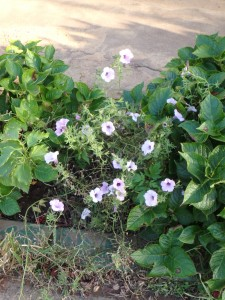 遊歩道の花壇の花 名は分らず