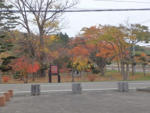 公園も紅葉してきれいですね