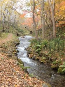 きれいな川が流れる