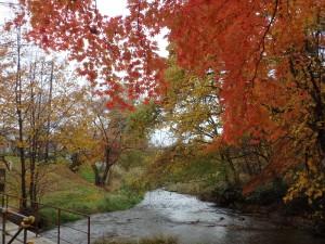 暖かな紅葉の1日