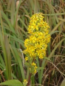 黄色いきれいな花