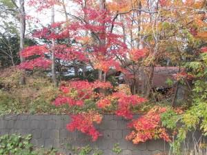 白老の小路の紅葉