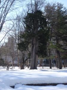 美術館の前庭には まだ雪がたっぷり