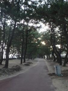 松並木を走る