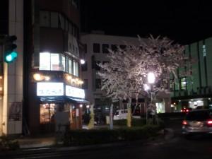 夜桜で一杯もいいなあ