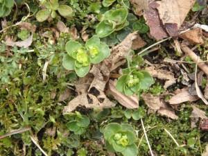 可愛い緑の花