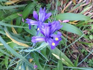 紫のきれいな花 名前は知らない