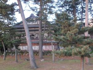 朝日に照らされる松林