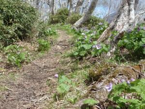 沢山の花が咲き乱れる 登山道