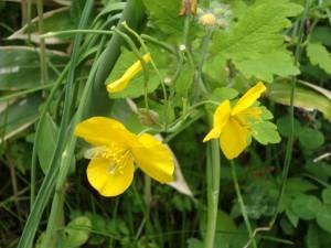 名は分らない黄色い花