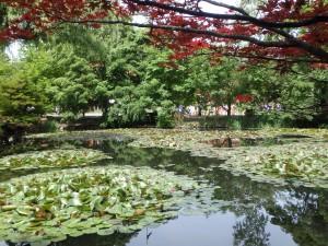 池とヤマモミジ