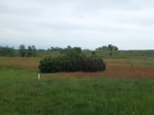 きれいな赤い草原