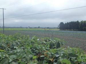 恵庭の畑作地帯 遠くから霧雨が来そうだ