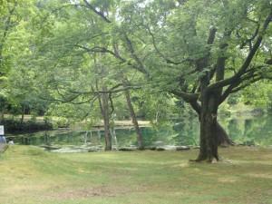 きれいで静かな鳥沼公園 ほっとする