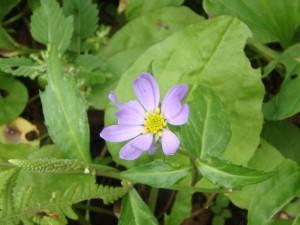 名の知らぬきれいな花
