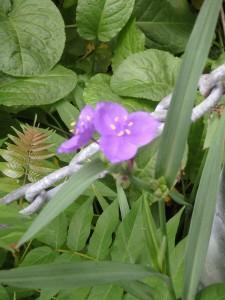 名の知らぬ可愛い花