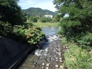 意外ときれいな川の景色