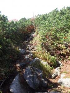 岩の多い道を手も使いながら登る
