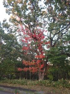 鮮やかな紅葉をパチリ