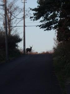 街中でも鹿が出る八丁平