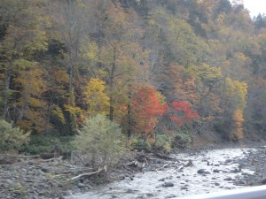 ウルマナイ川上流の紅葉