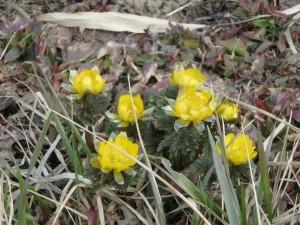 春を告げるお花