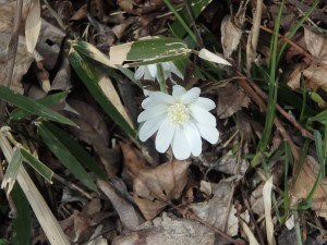 すっきりきれいな白い花