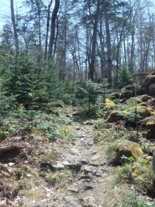 岩が多いが 昨日より歩きやすい