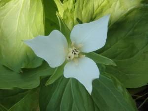 端正な顔立ちの花