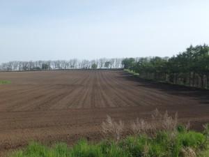 絵になるきれいな畑