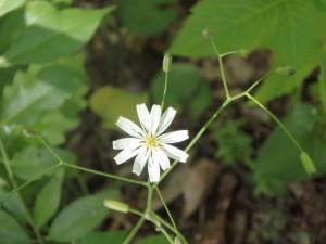 目立つ形の白い花