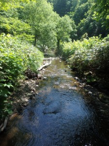 きれいな川を渡る