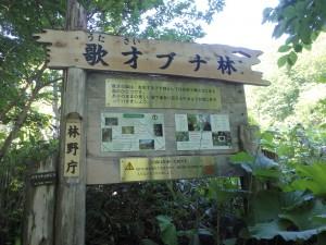 ブナ林の入口