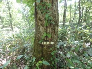 うっそうとしたブナ林が続く