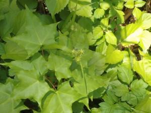 名の分らぬ緑の花