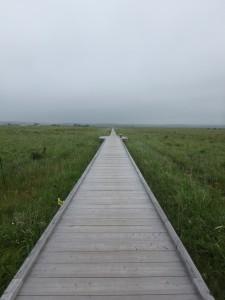 まっすぐで歩きやすい木道 人は4~5人