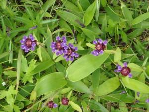 名の知らぬ紫の花