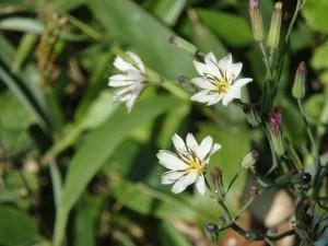 きれいな白い花